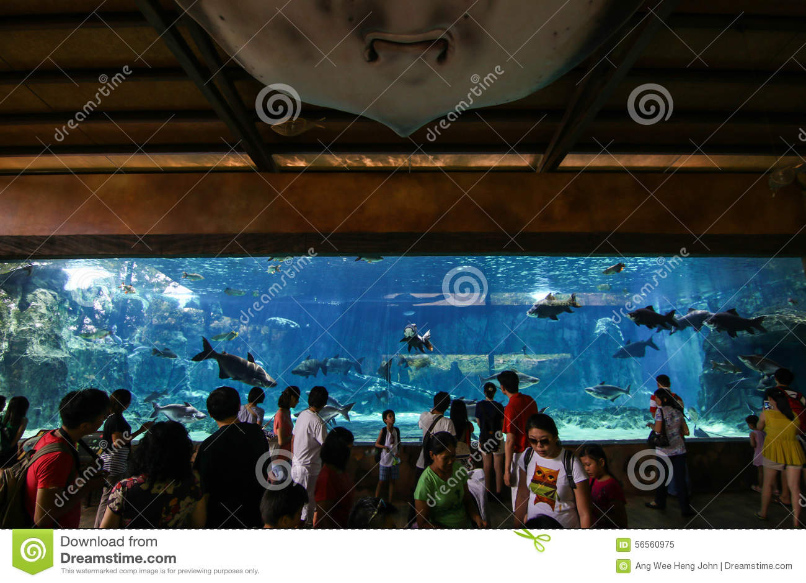 Download Υδρόβιο τουριστικό αξιοθέατο Εκδοτική εικόνα - εικόνα από γοητευτικός, εξερευνήστε: 56560975