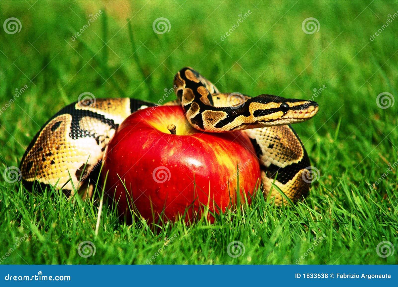 φίδι αμαρτίας μήλων