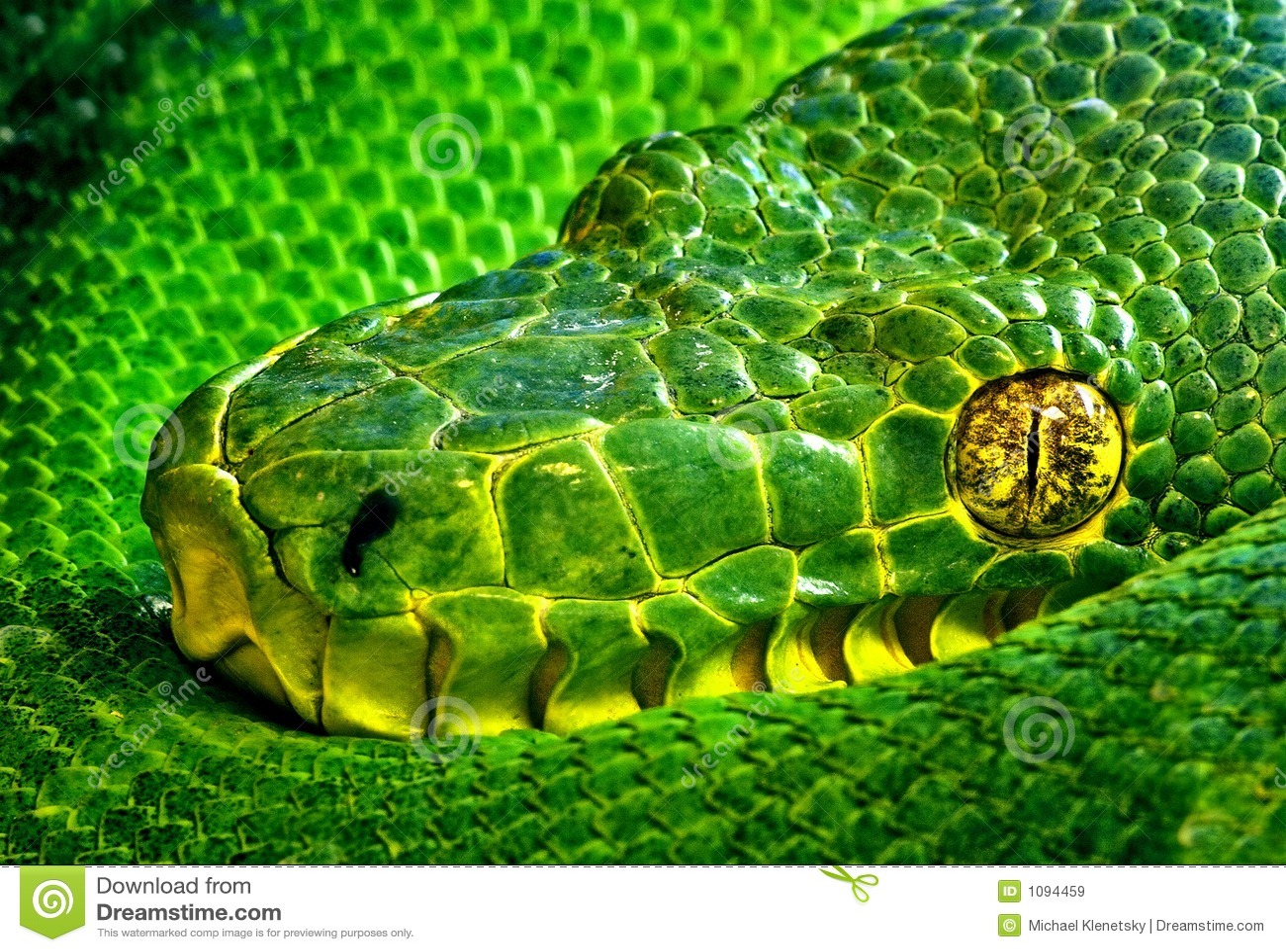 φίδι ματιών