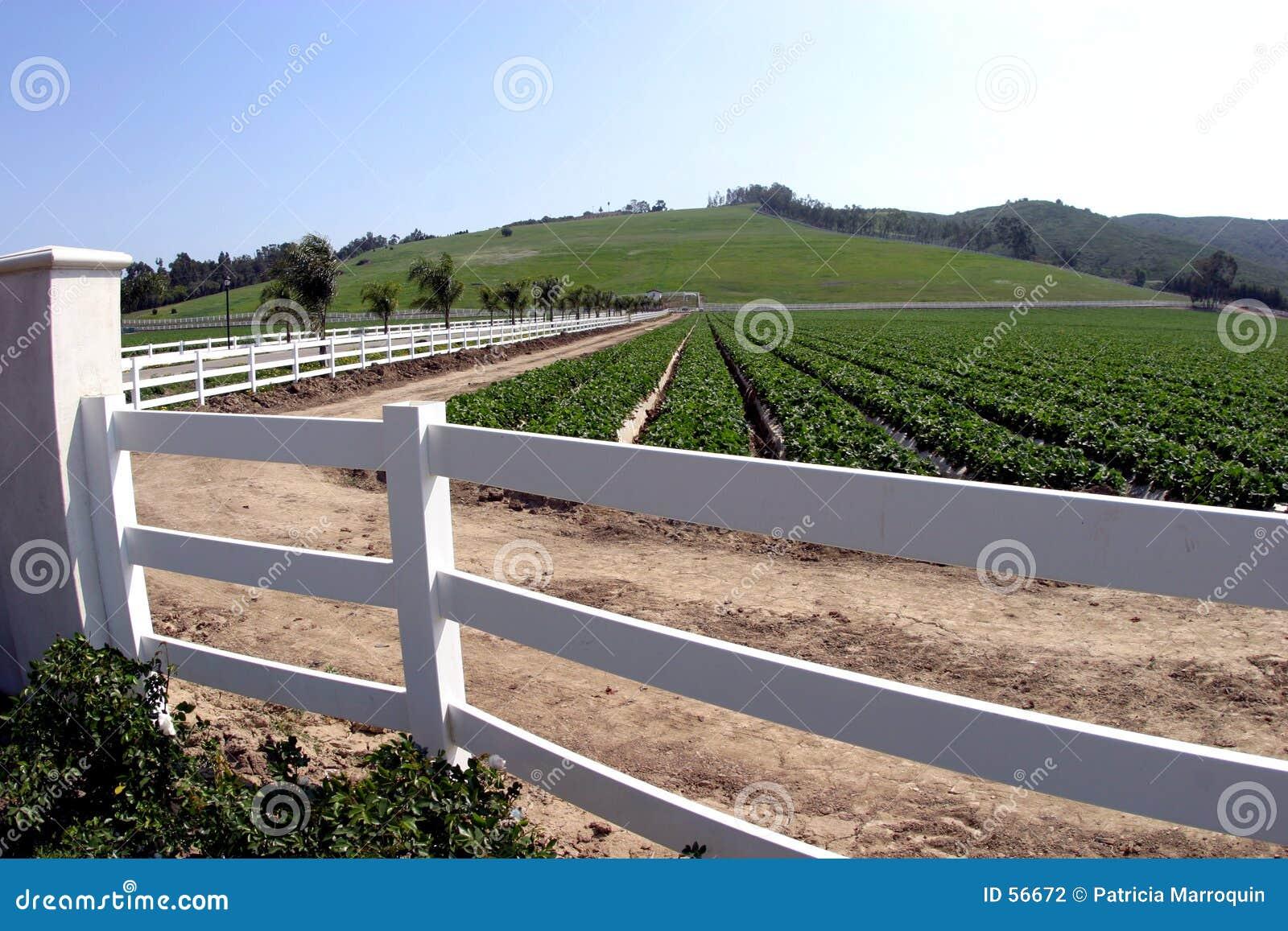 Download φανταχτερό αγρόκτημα στοκ εικόνες. εικόνα από καλλιέργεια - 56672