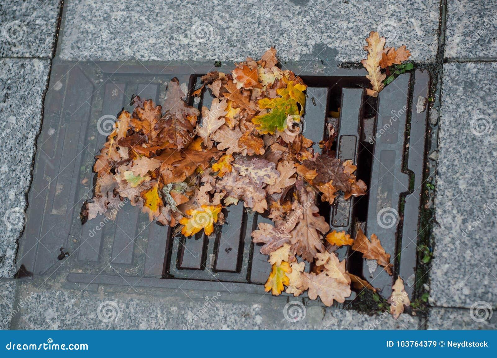 Φθινοπωρινά δρύινα φύλλα σε μια λακκούβα του νερού που εμποδίζει το α