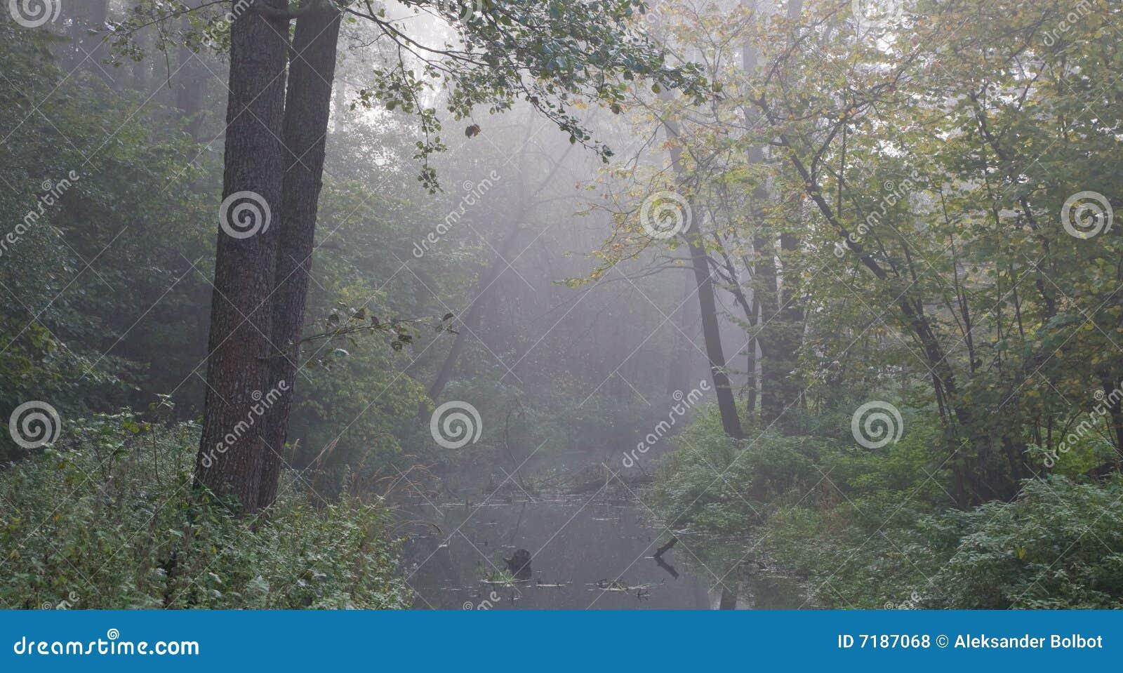 φθινοπωρινός πρώιμος δασικός misty ποταμός πρωινού
