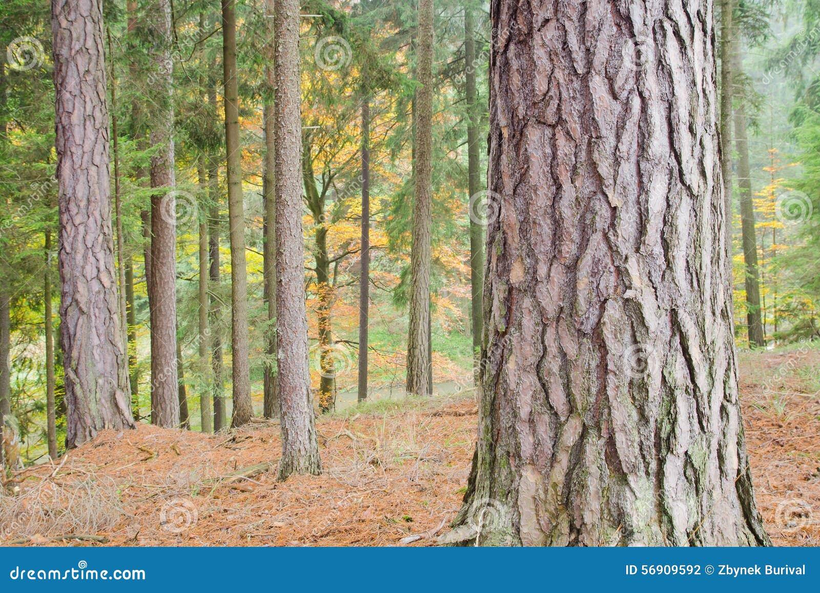 Φθινοπωρινό ζωηρόχρωμο δάσος