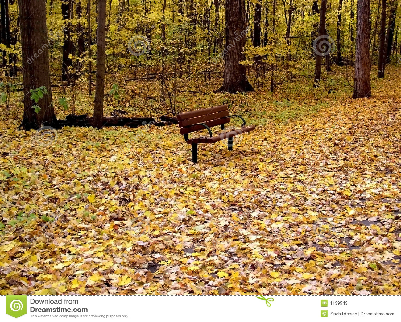 φθινόπωρο κίτρινο