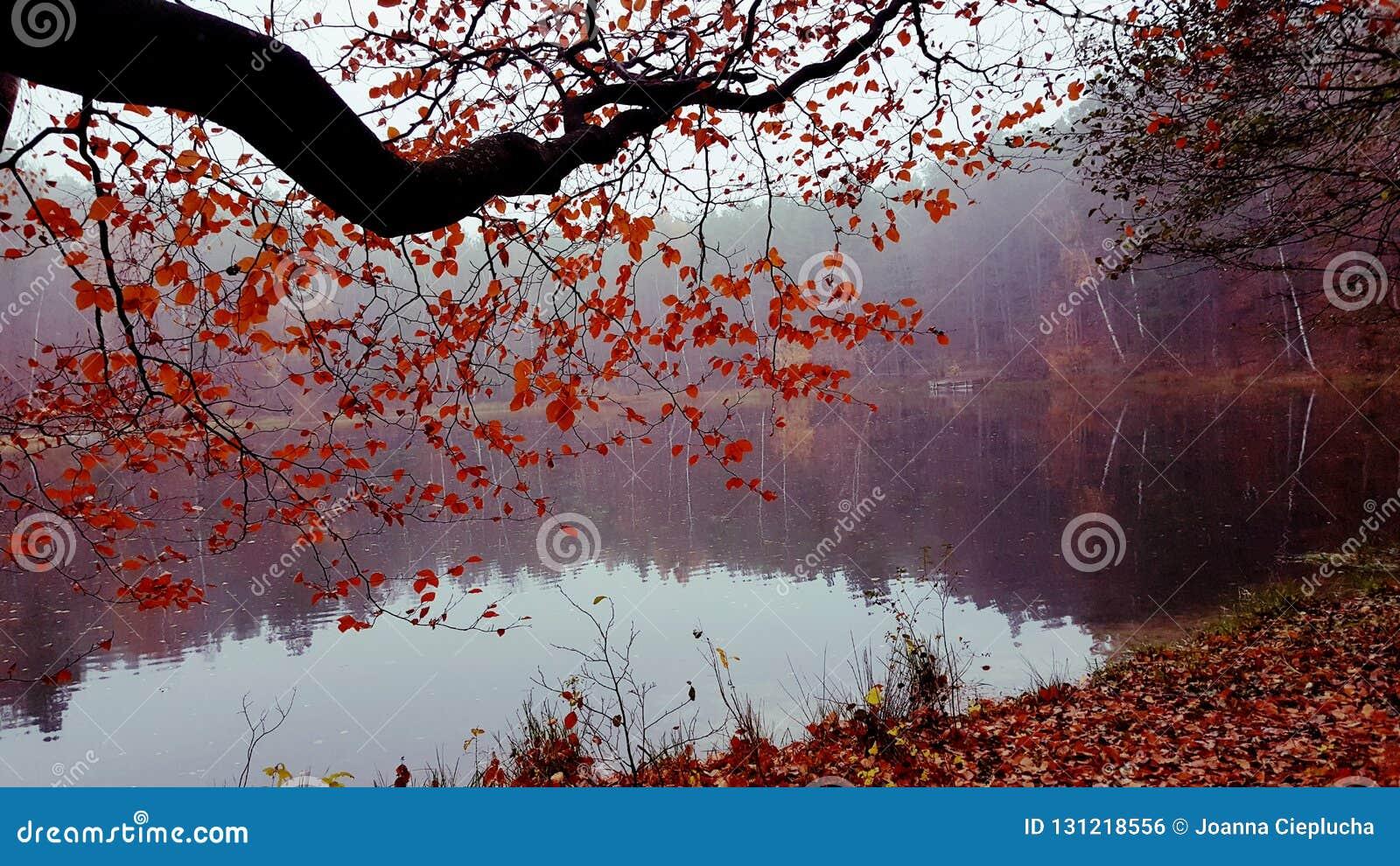φθινόπωρο ομιχλώδες