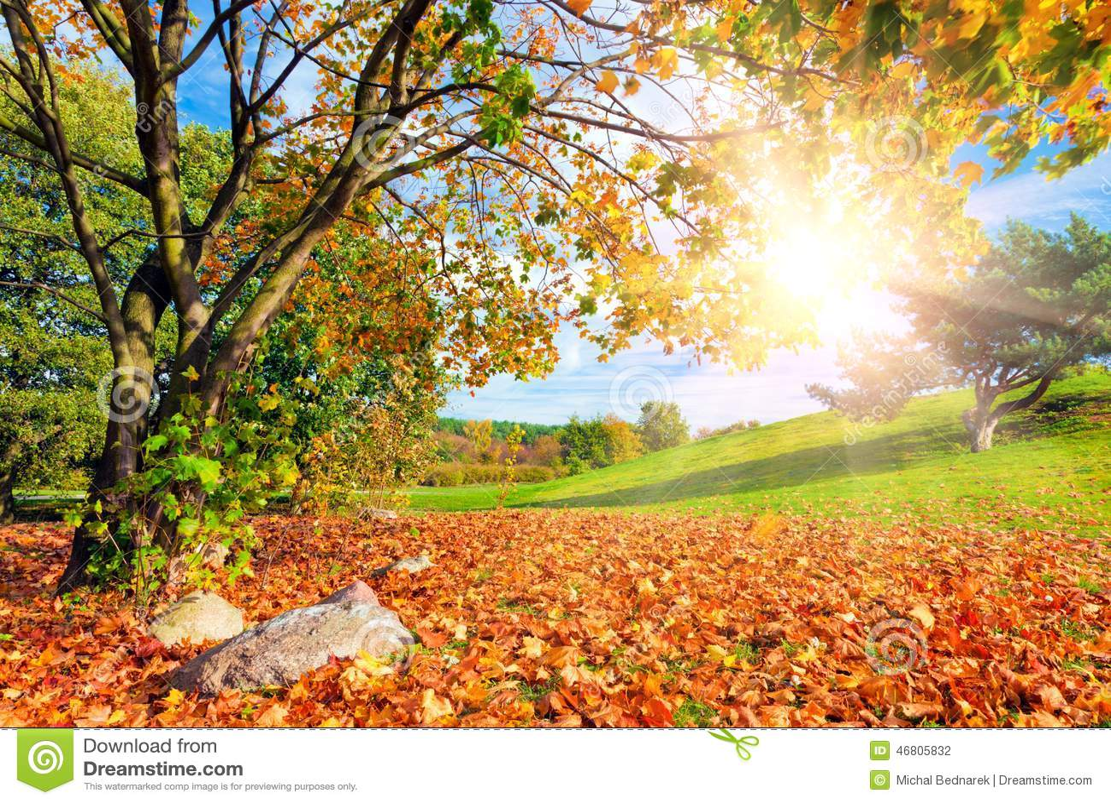 Φθινόπωρο, τοπίο πτώσης με ένα δέντρο Να λάμψει ήλιων