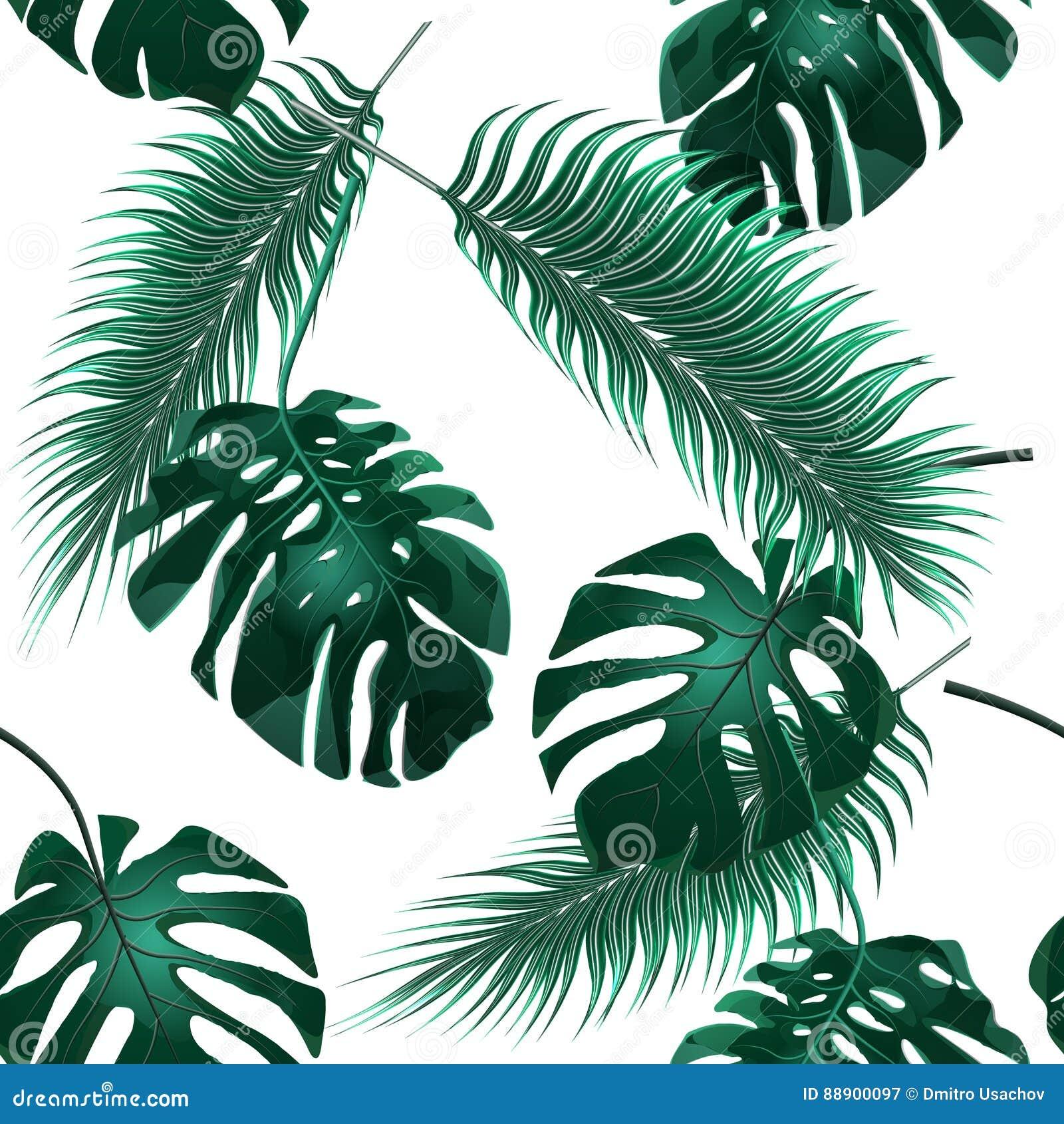 φοίνικας φύλλων τροπικός Αλσύλλια ζουγκλών floral άνευ ραφής ταπετσαρία αν&al απεικόνιση