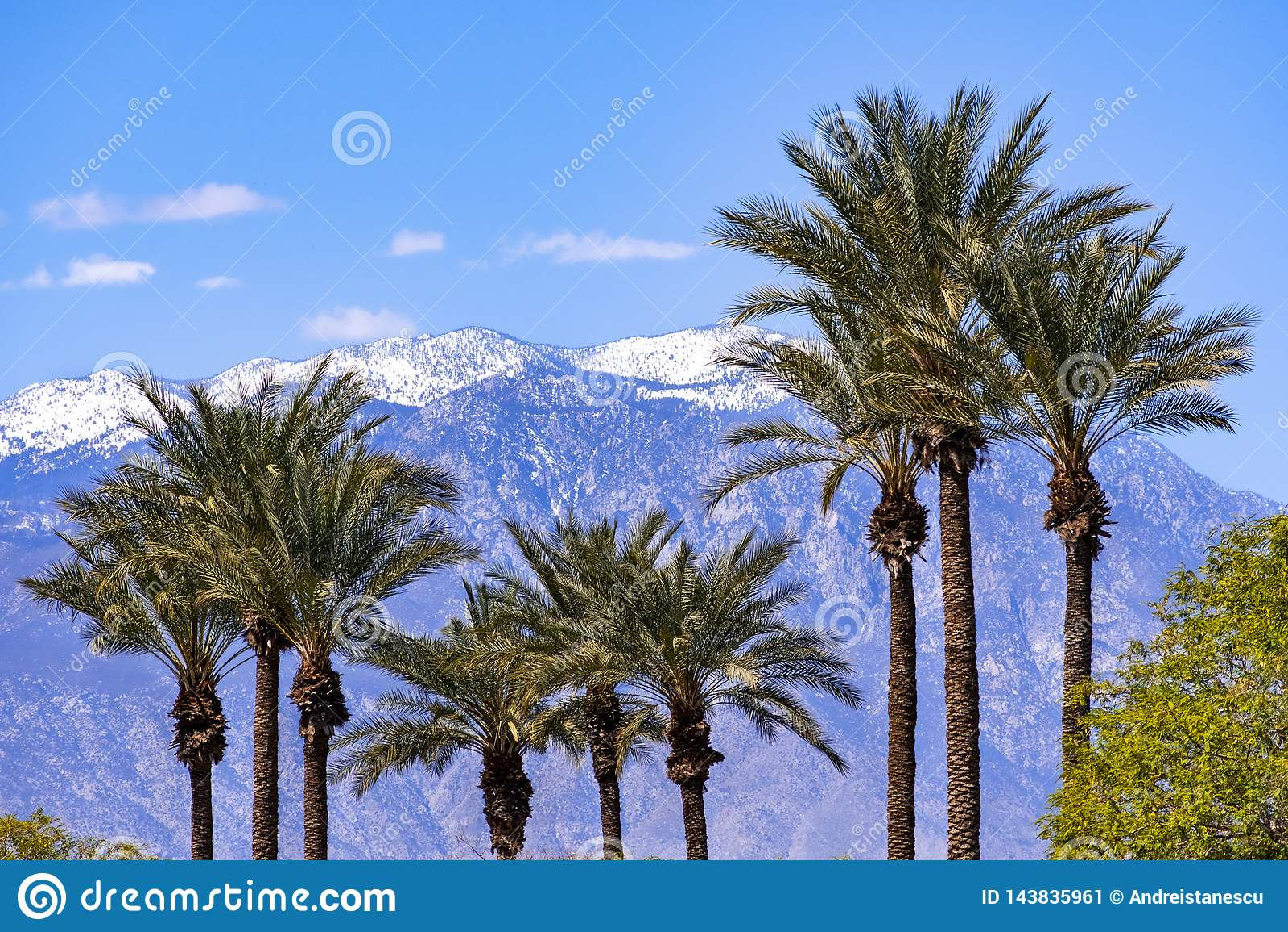 Φοίνικες και τα χιονισμένα βουνά SAN Jacinto, Παλμ Σπρινγκς, κοιλάδα Coachella, Καλιφόρνια