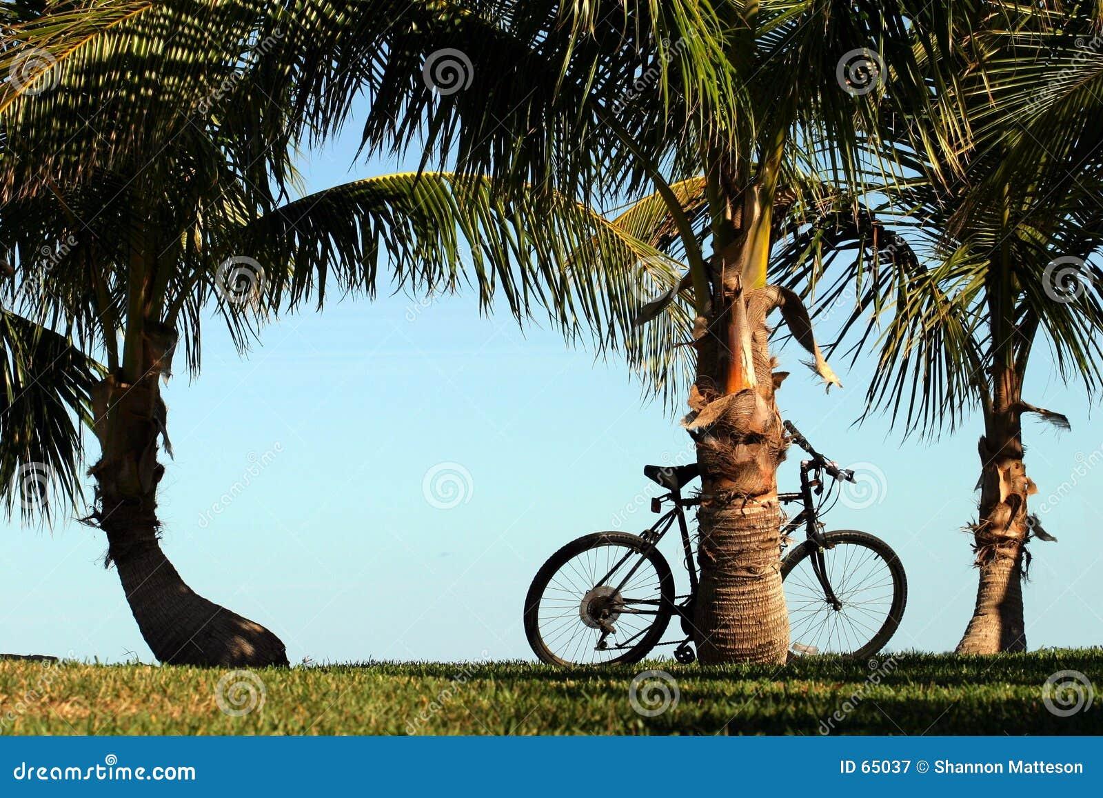 φοίνικες καρύδων ποδηλάτ&o