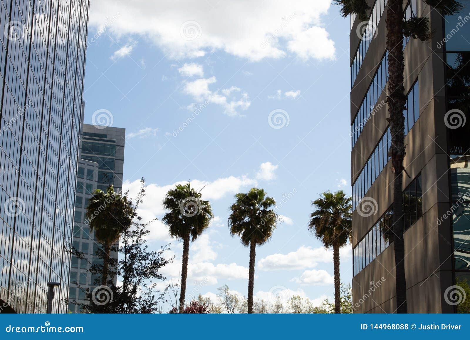 Φοίνικες που δεσμεύουν τα κτήρια από κοινού