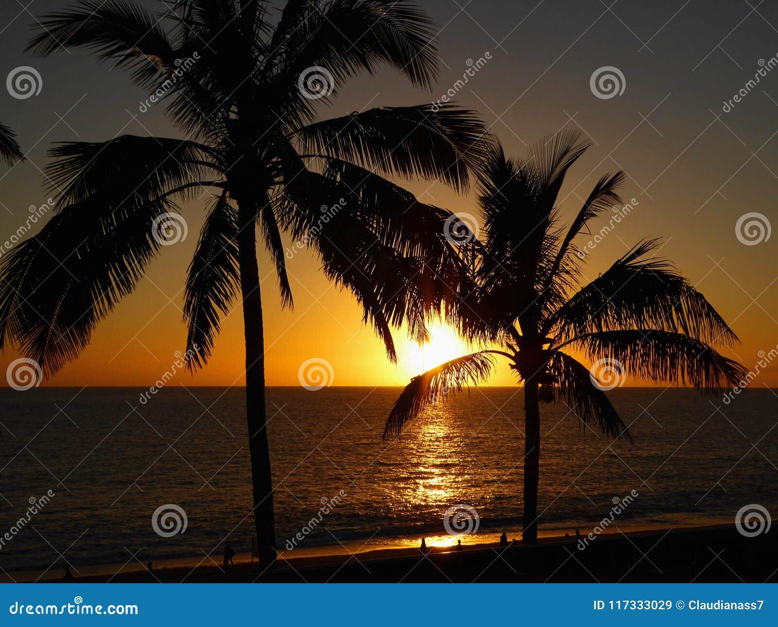 Φοίνικες στους NAO (Εθνικός Οργανισμός Διαιτησίας) Puerto σε μια παραλία στο Λα Palma