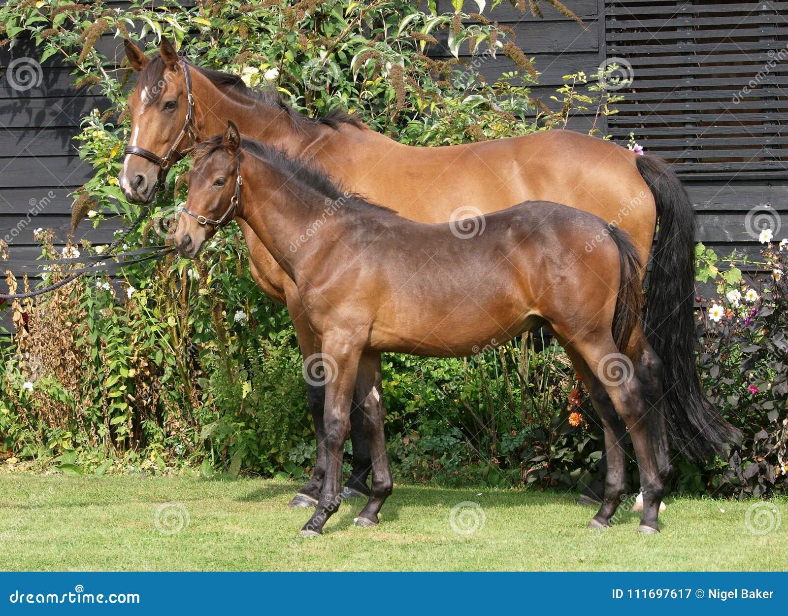 Φοράδα και foal