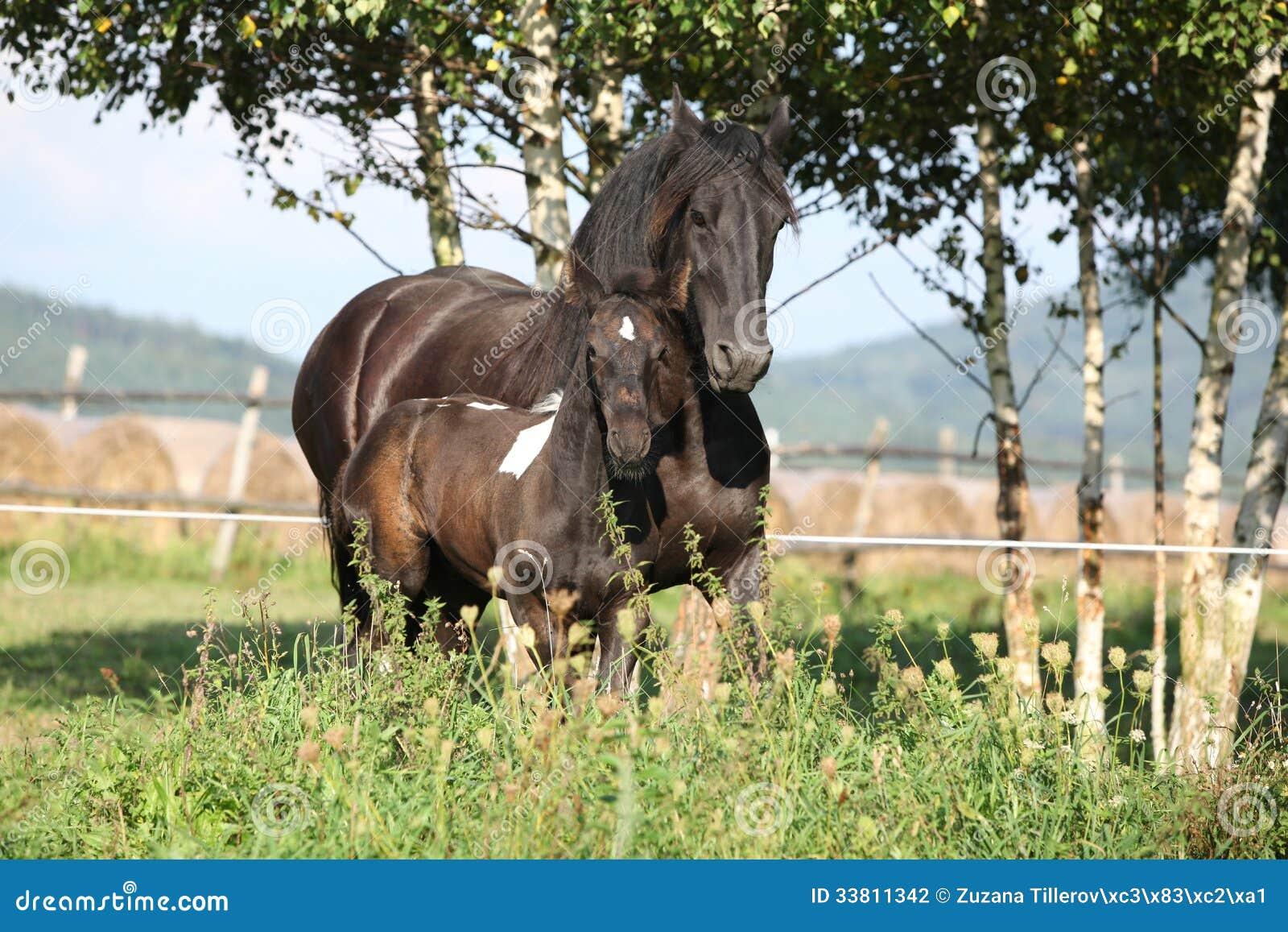 Φοράδα με foal που τρέχει το φθινόπωρο