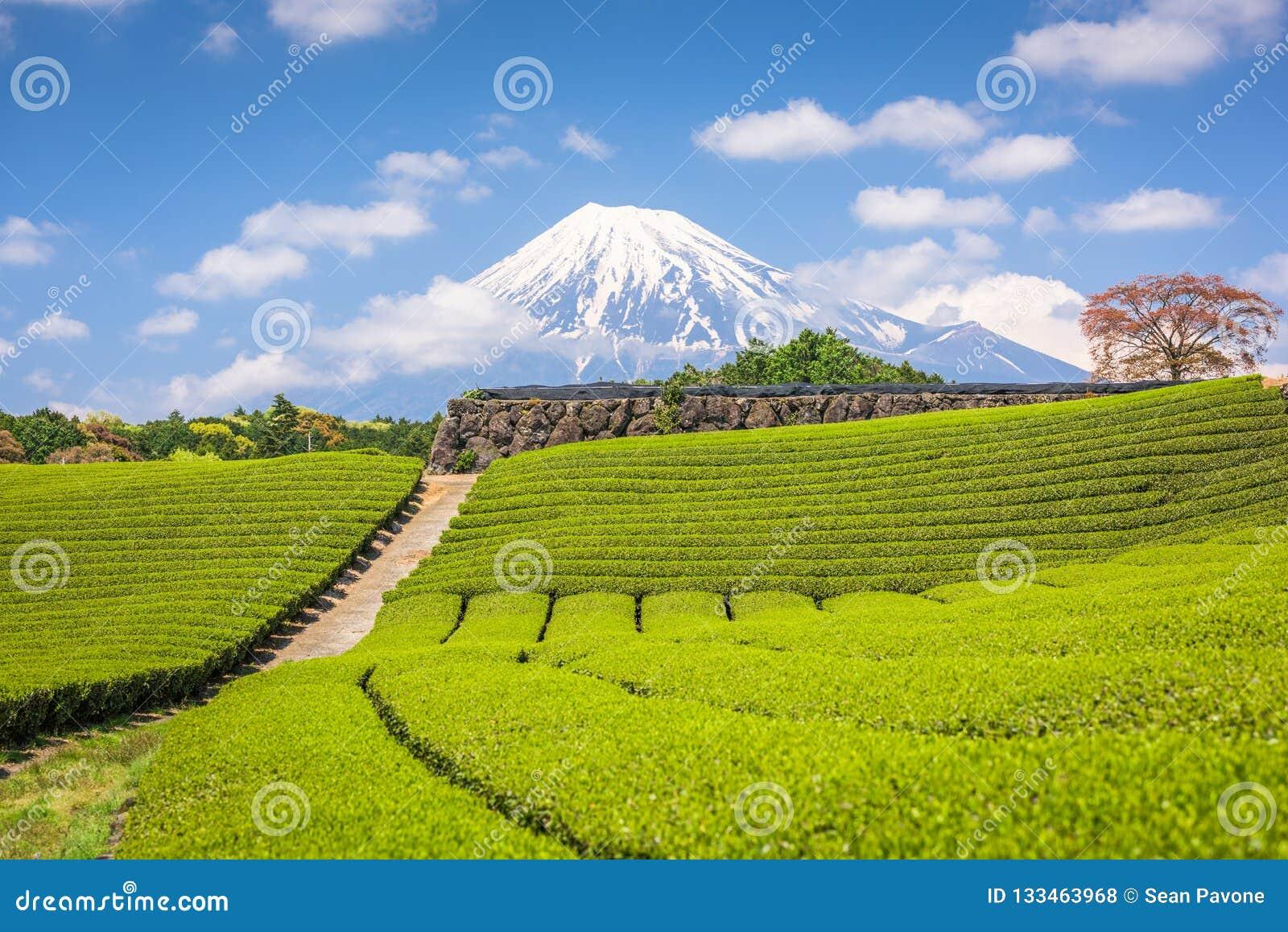Φούτζι, Ιαπωνία στην ΑΜ Φούτζι και τομείς τσαγιού
