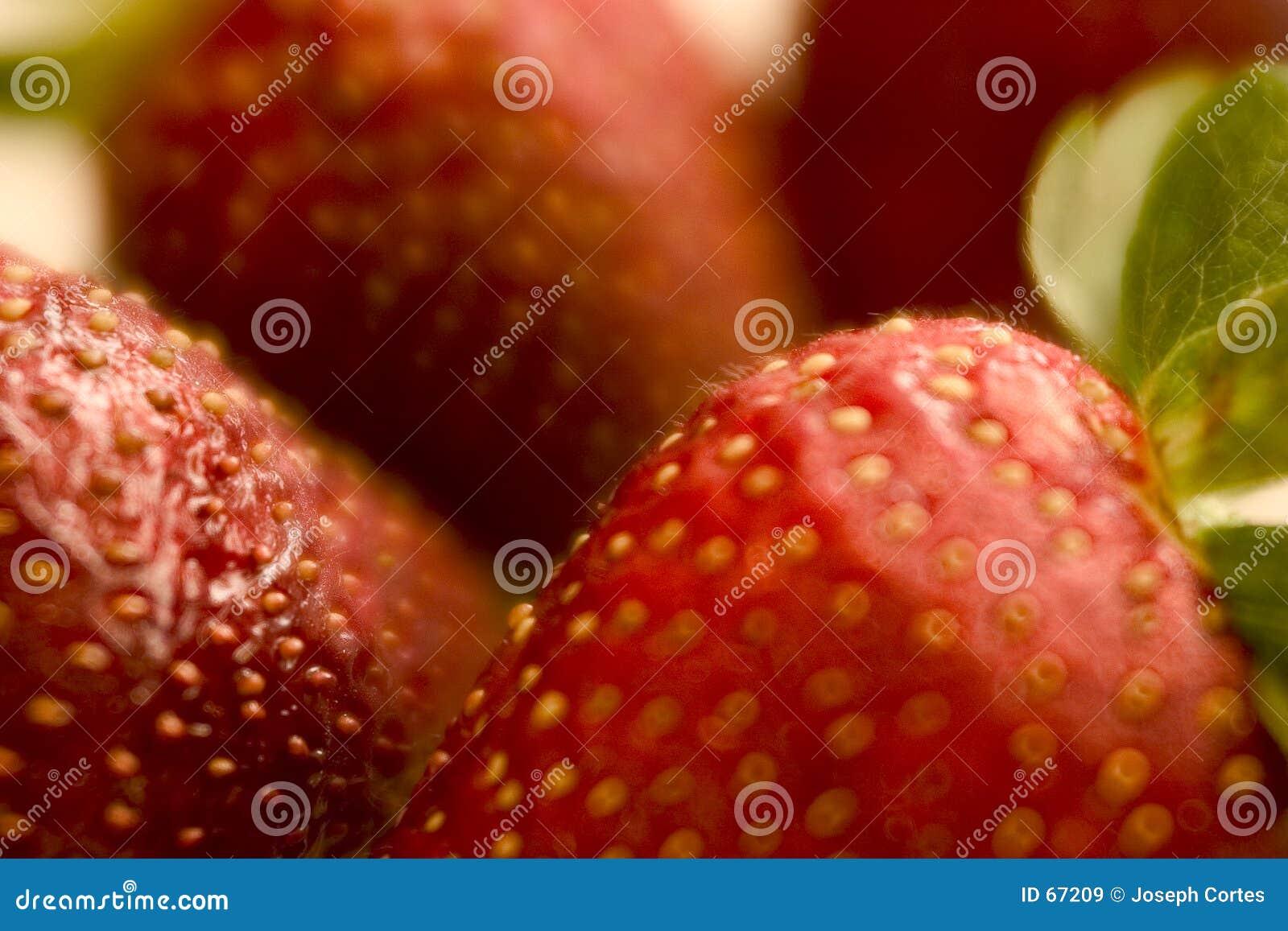 φράουλα πεδίων