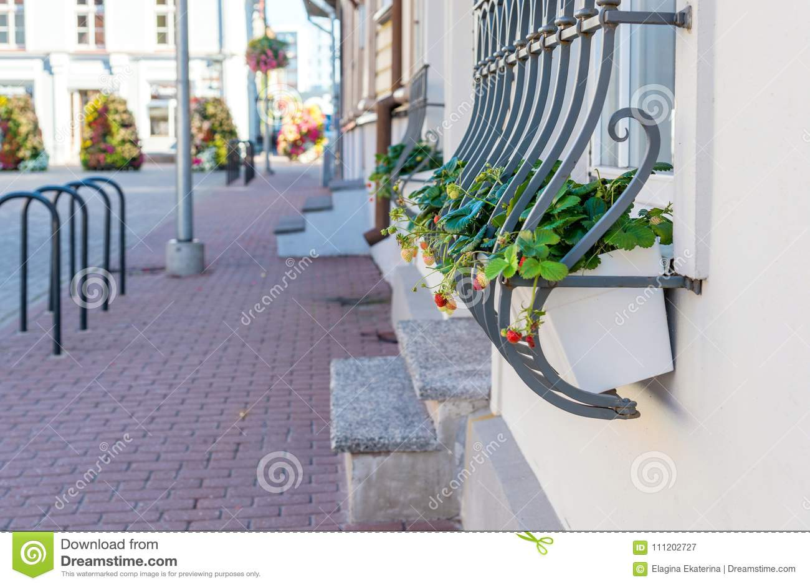 Φράουλα flowerpot στην οδό Διακόσμηση παραθύρων
