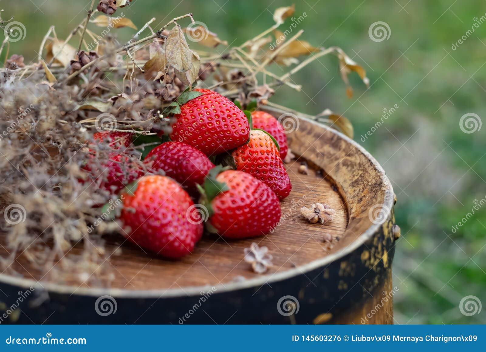 Φράουλες σε ένα ξύλινο βαρέλι κρασιού σε έναν οπωρώνα στο καλοκαίρι