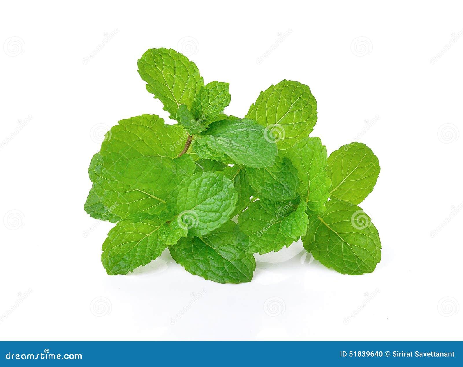 Φρέσκα ακατέργαστα φύλλα μεντών που απομονώνονται στο άσπρο υπόβαθρο