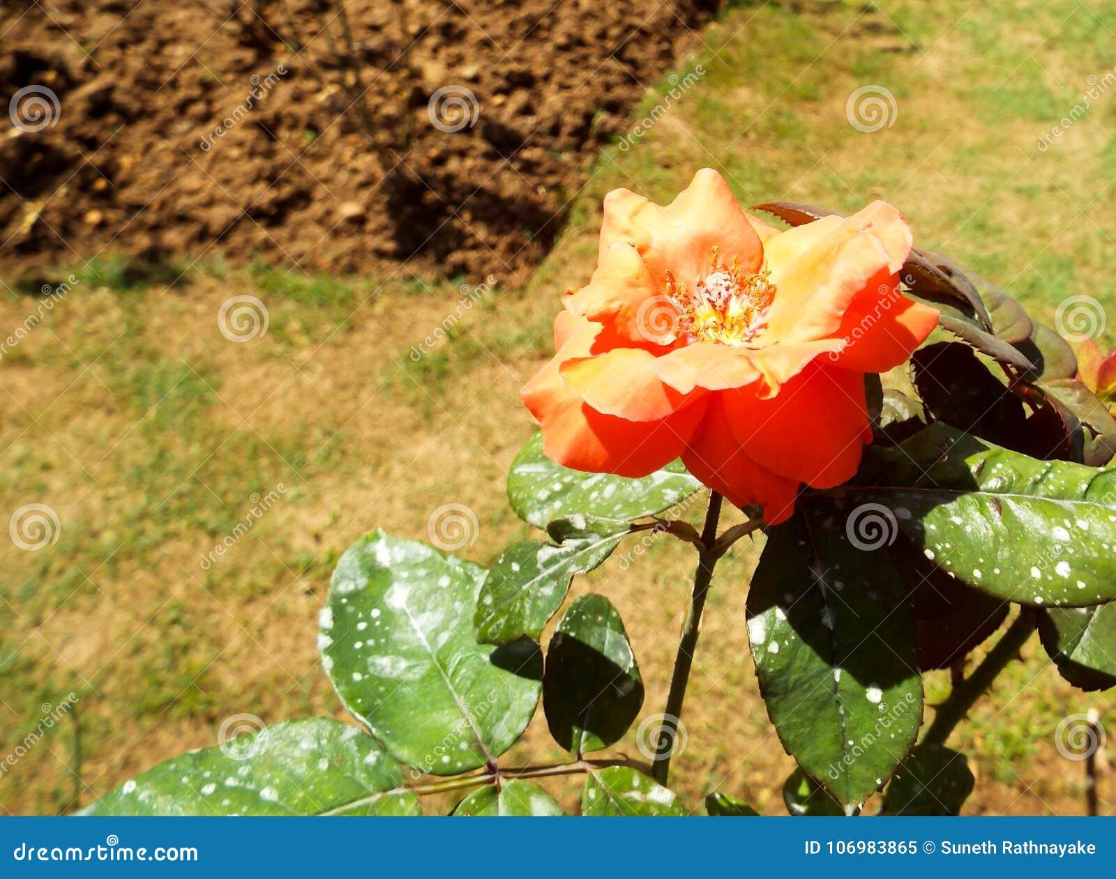 Φρέσκα λουλούδια κήπων από τον κήπο