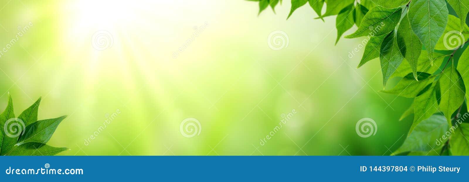 Φρέσκα φύλλα στην άνοιξη