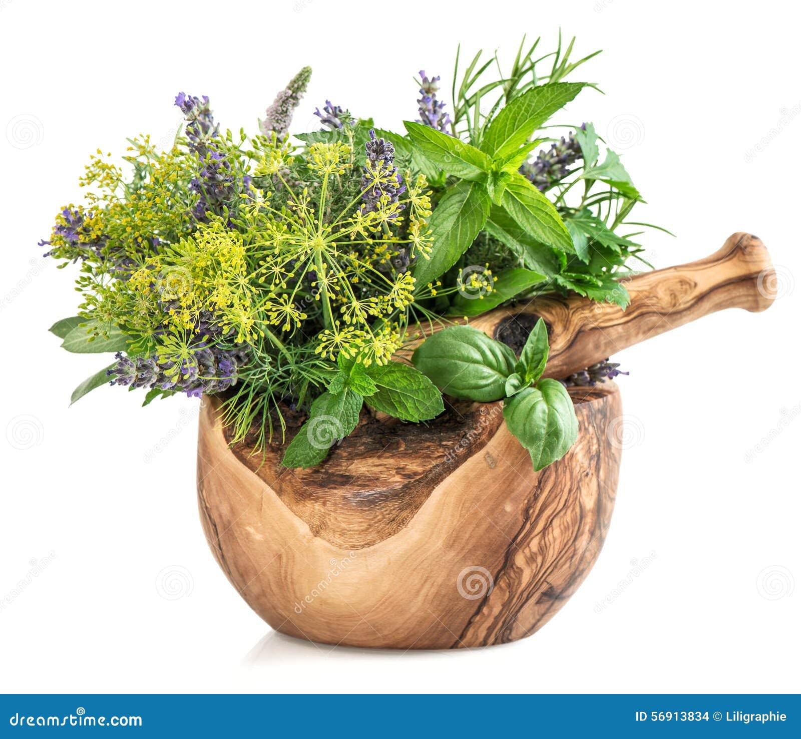 Φρέσκια μέντα χορταριών και καρυκευμάτων, βασιλικός, άνηθος, δεντρολίβανο, φασκομηλιά, lavend