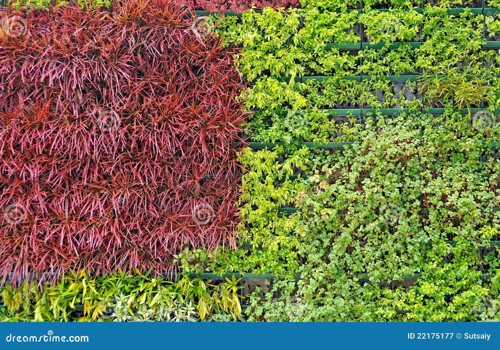 Φρέσκια πράσινη χλόη άνοιξη