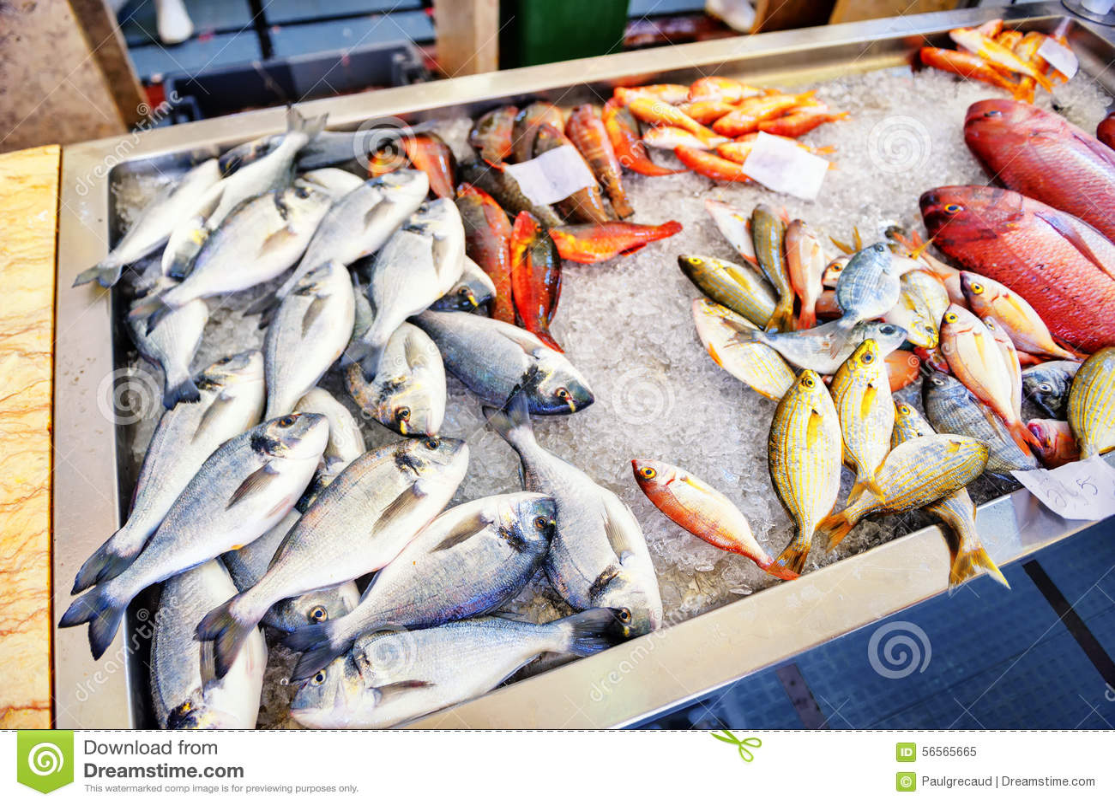 Download φρέσκος πάγος ψαριών Αγορά ψαριών στο νησί της Μαδέρας Στοκ Εικόνα - εικόνα από μετρητής, dorado: 56565665
