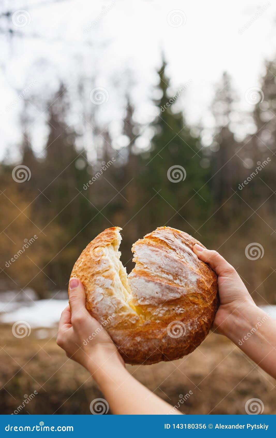 Φρέσκο άσπρο ψωμί στο υπόβαθρο του δάσους που σπάζει τα χέρια των ανοικτών γυναικών