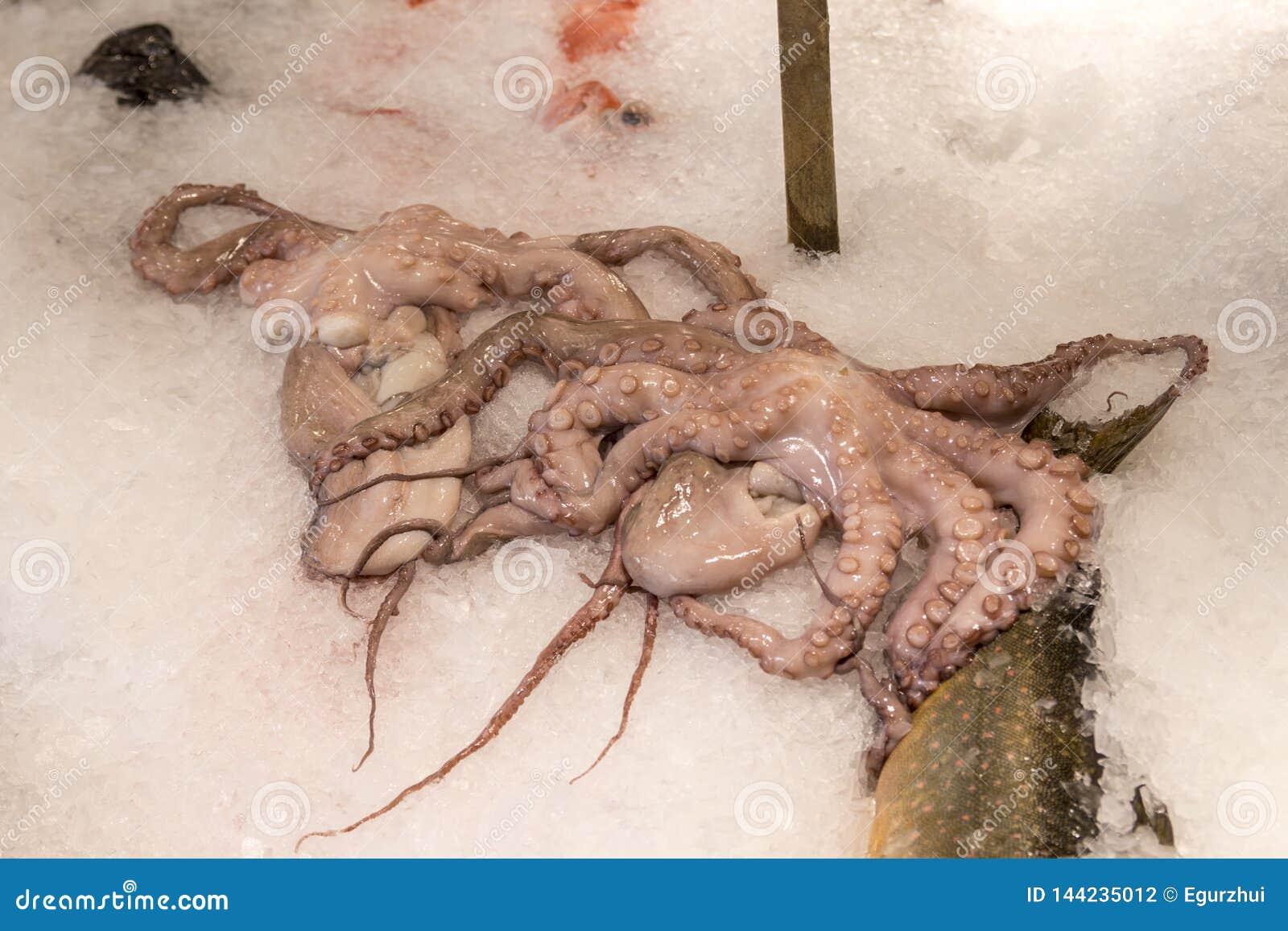 φρέσκο χταπόδι στον πάγο