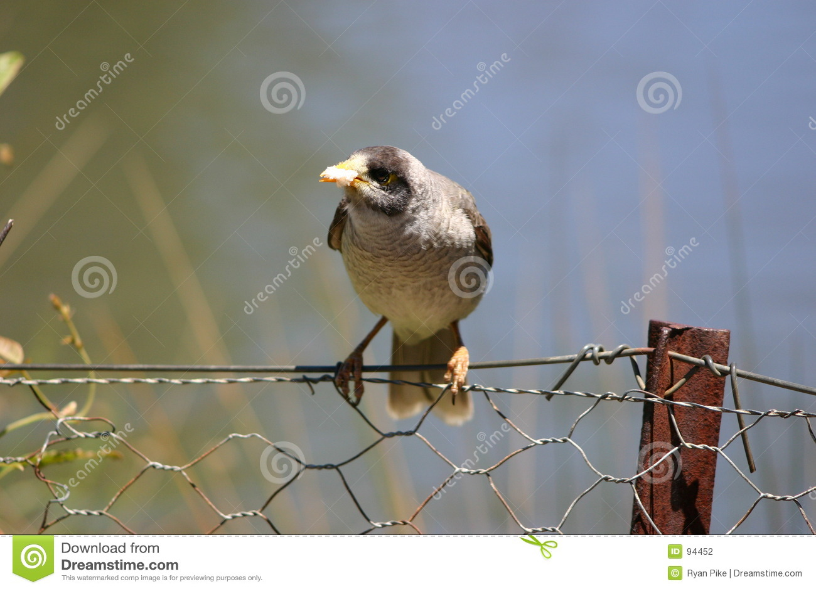 φραγή πουλιών