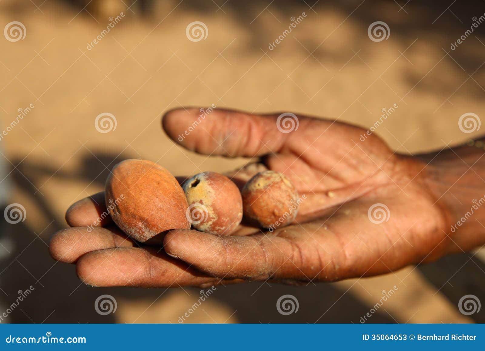 Φρούτα Marula