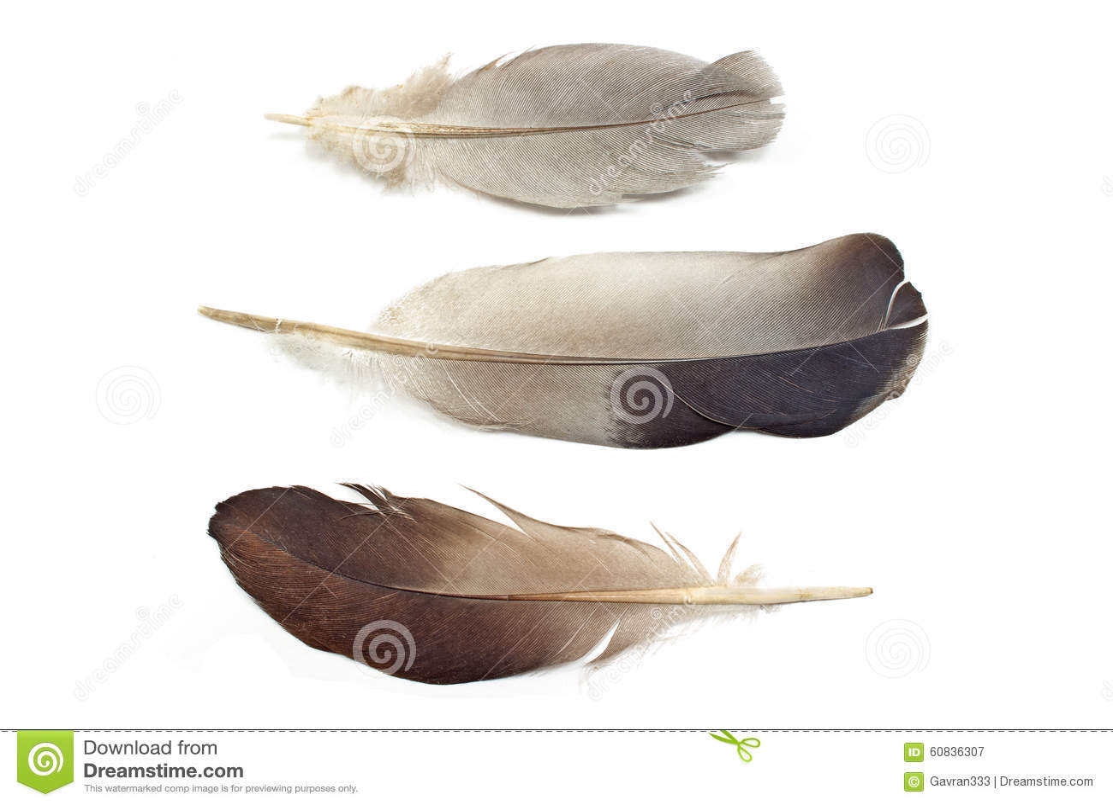φτερά τρία