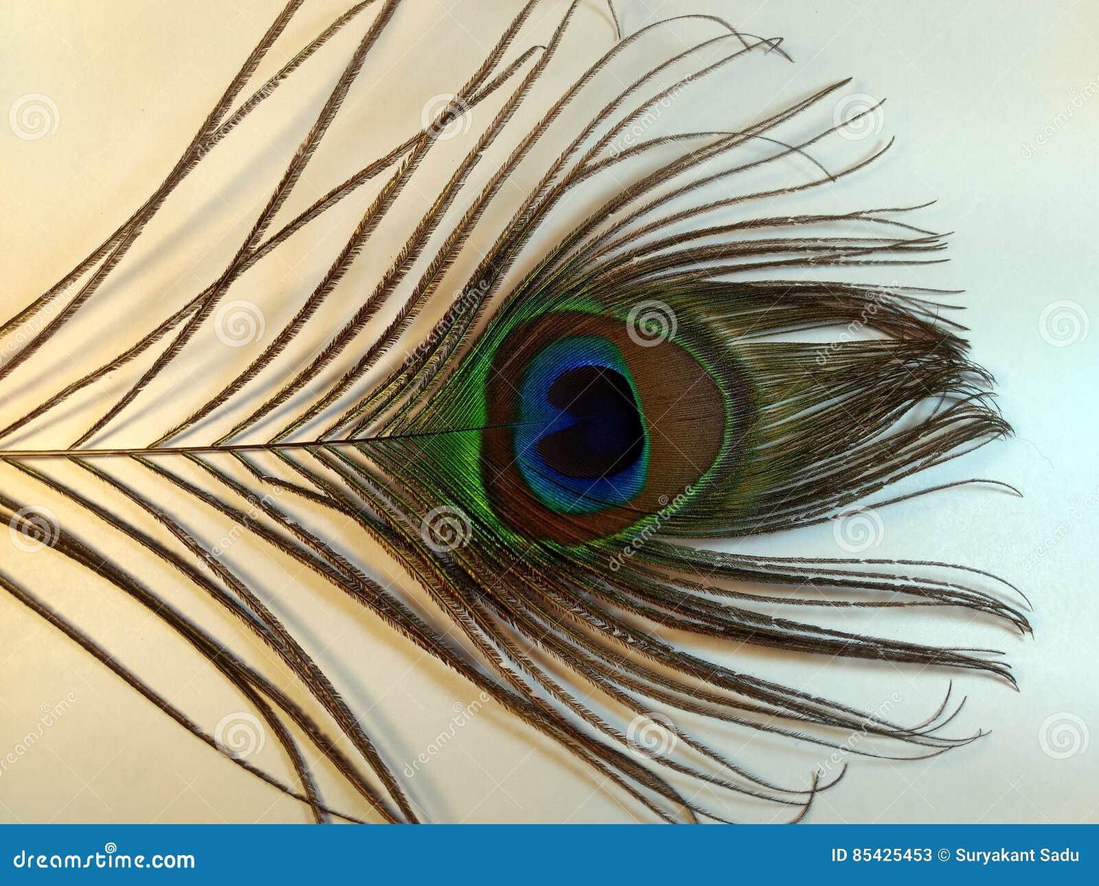 Φτερά Peacock ή Peafowl