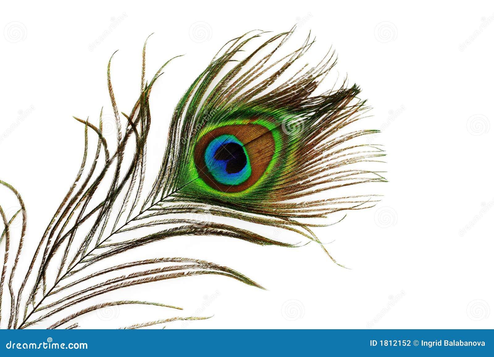 φτερό ματιών peacock