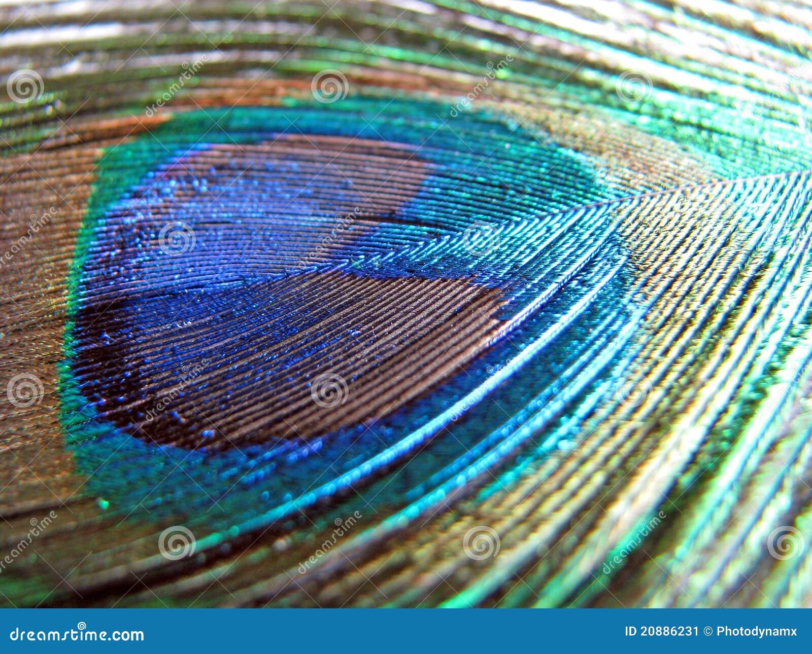 φτερό peacock