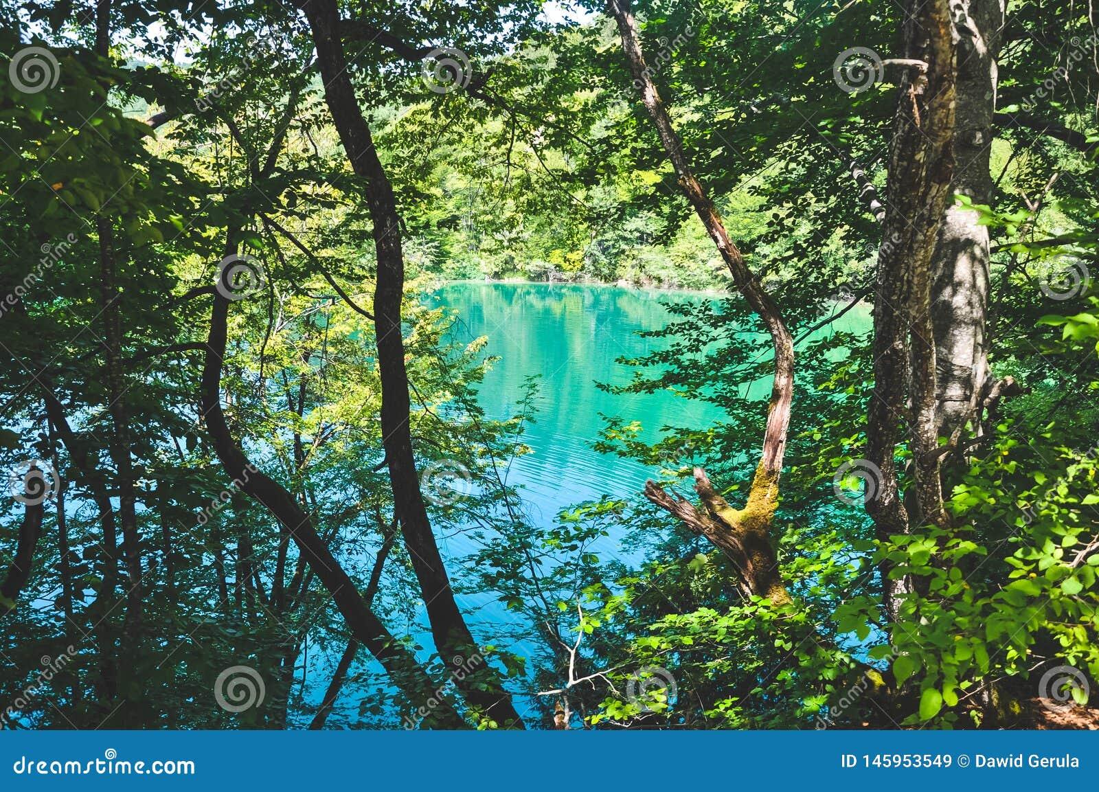 Φυσική άποψη των λιμνών Plitvice πίσω από το εθνικό πάρκο δέντρων, Κροατία