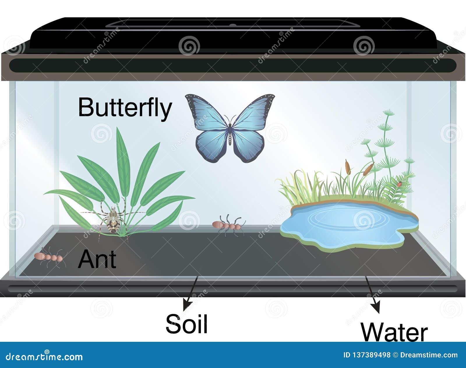 Φυσική - ενυδρείο και πεταλούδα