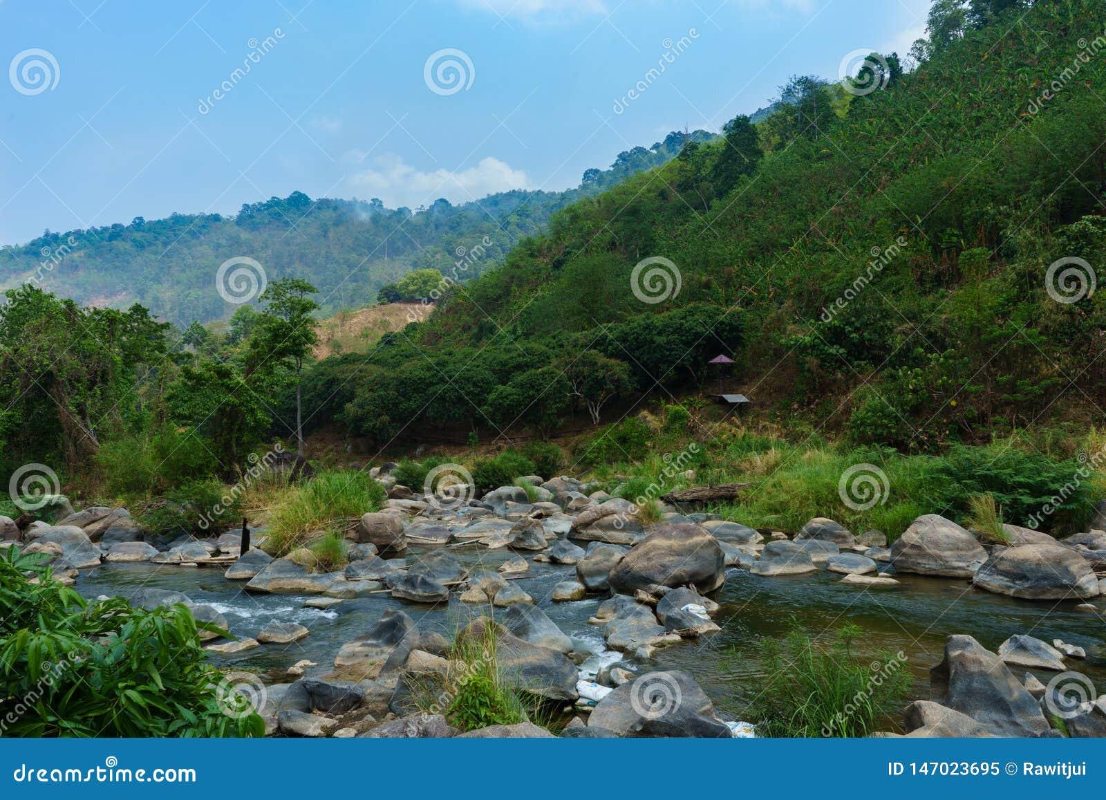 Φυσικός ποταμός στο δάσος με την άποψη τοπίων βράχων