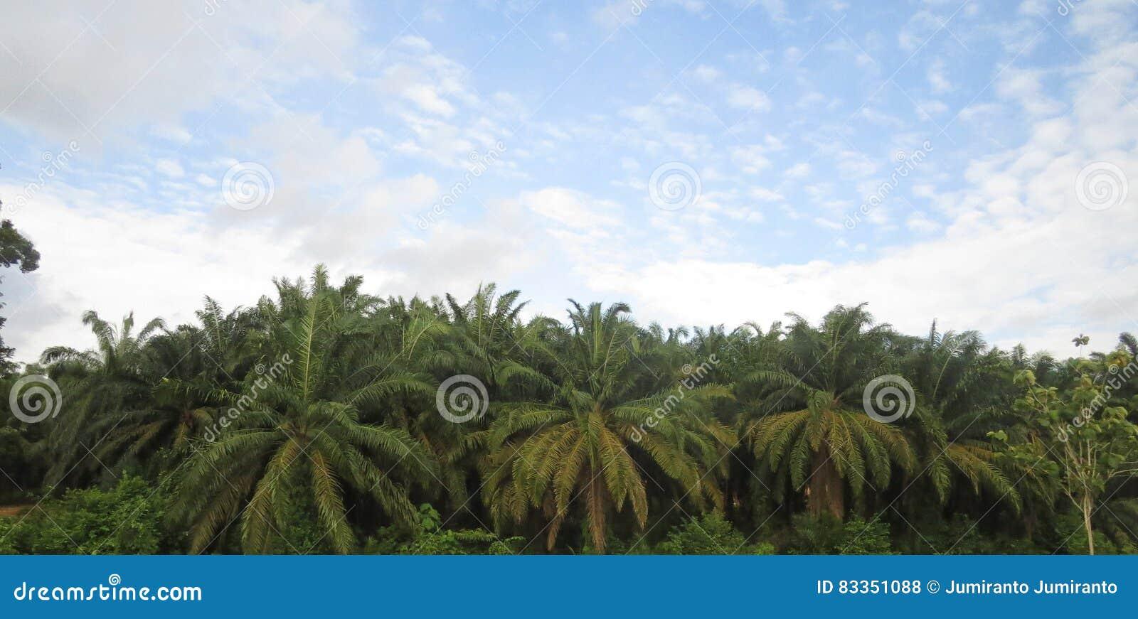 Φυτεία κατά μήκος της εθνικής οδού Μαλαισία
