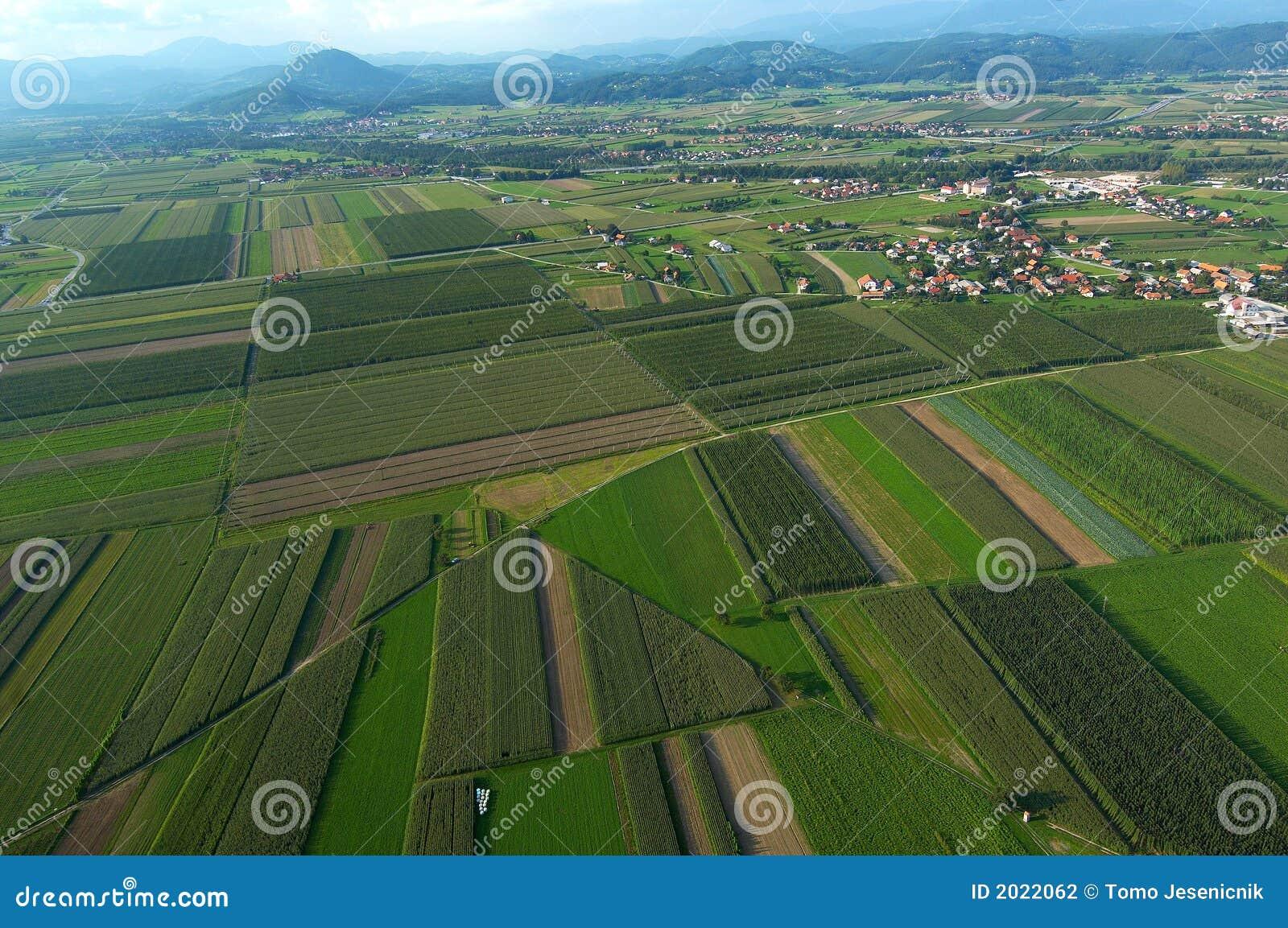 Στοκ φωτογραφία: φυτείες λυκίσκου