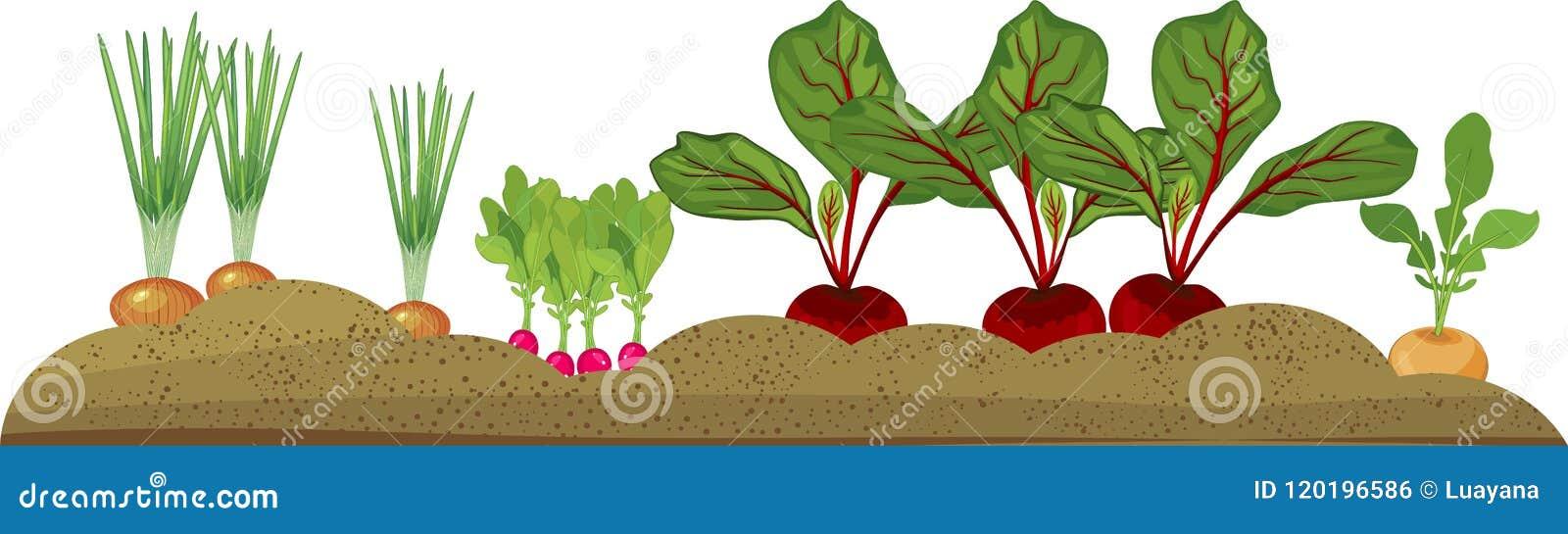 Φυτικό μπάλωμα με τα διαφορετικά λαχανικά ρίζας