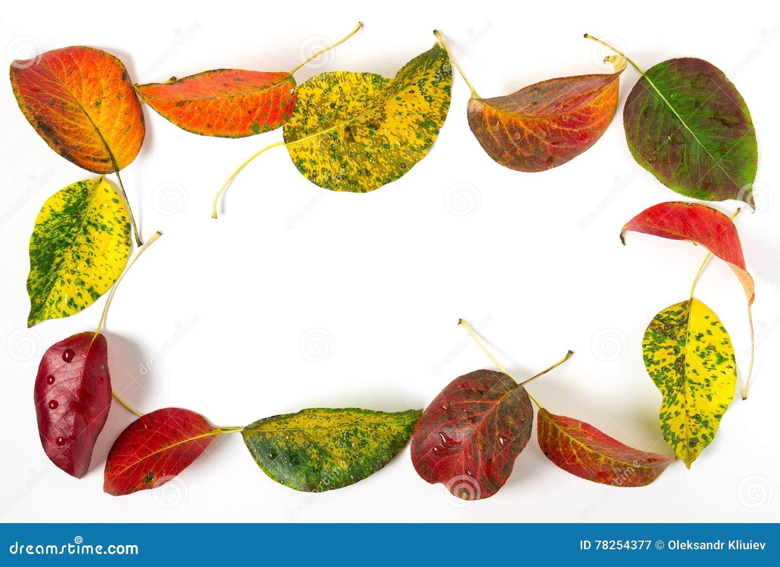φωτεινά φύλλα φθινοπώρου