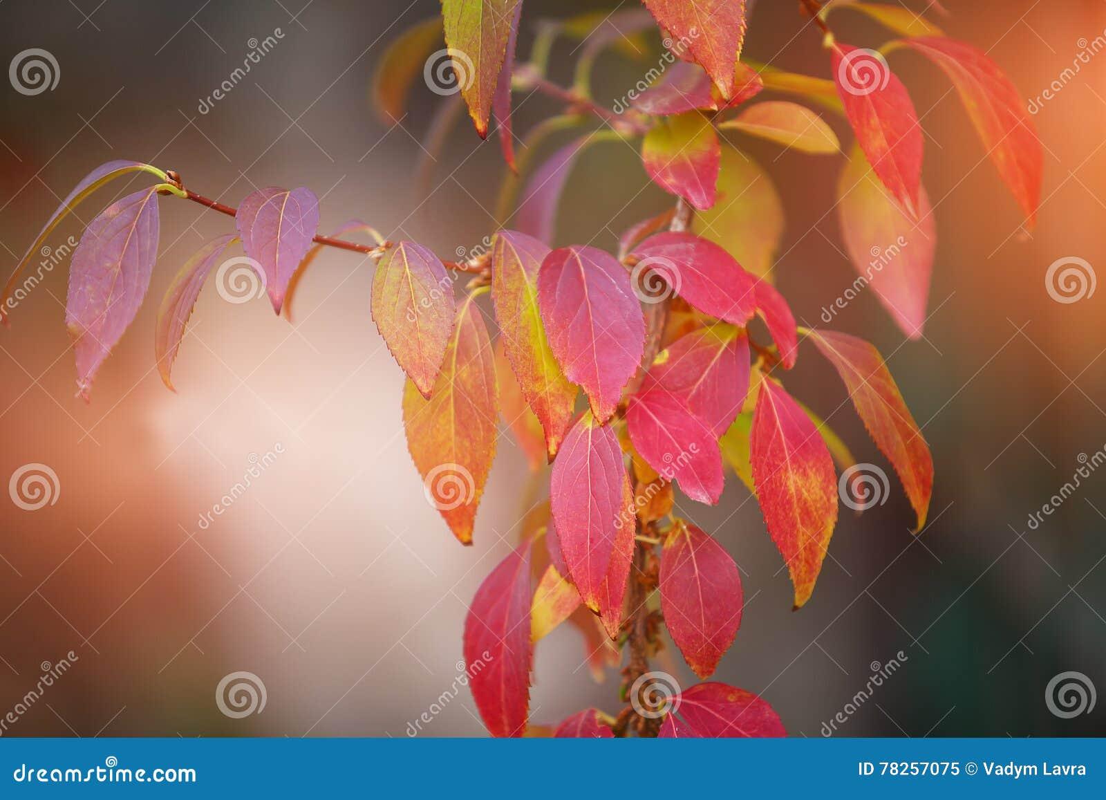 Φωτεινά χρωματισμένα φύλλα στους κλάδους στο δάσος φθινοπώρου