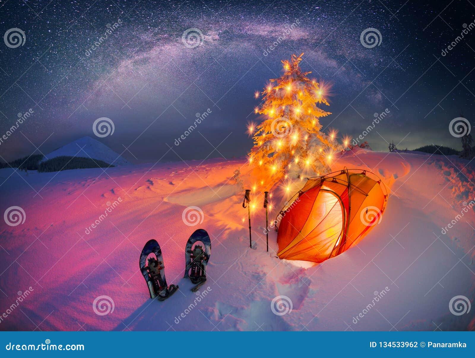 Φωτισμένο χειμερινό δάσος Carpathians
