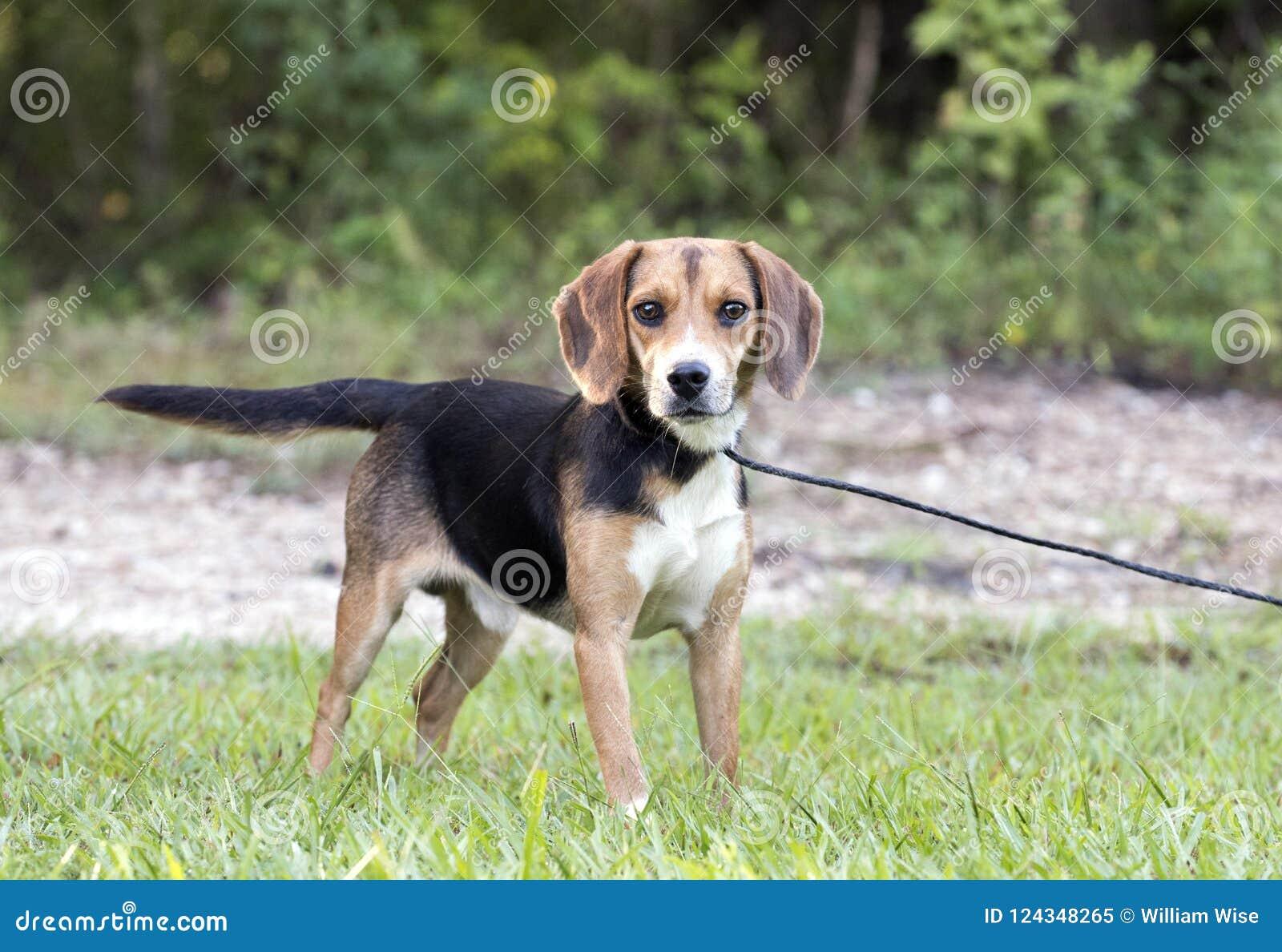 Φωτογραφία διάσωσης σκυλιών κυνηγιού κουνελιών λαγωνικών