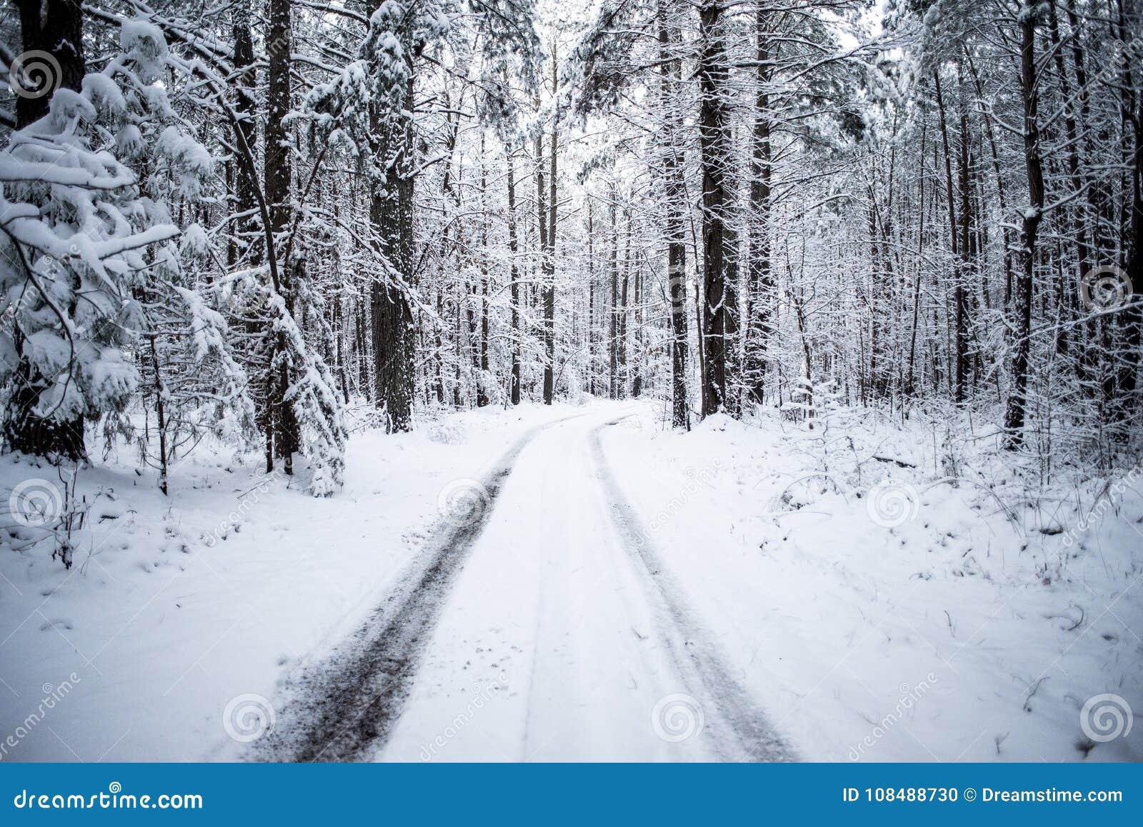 Φωτογραφία ενός χιονισμένου ίχνους στα ξύλα