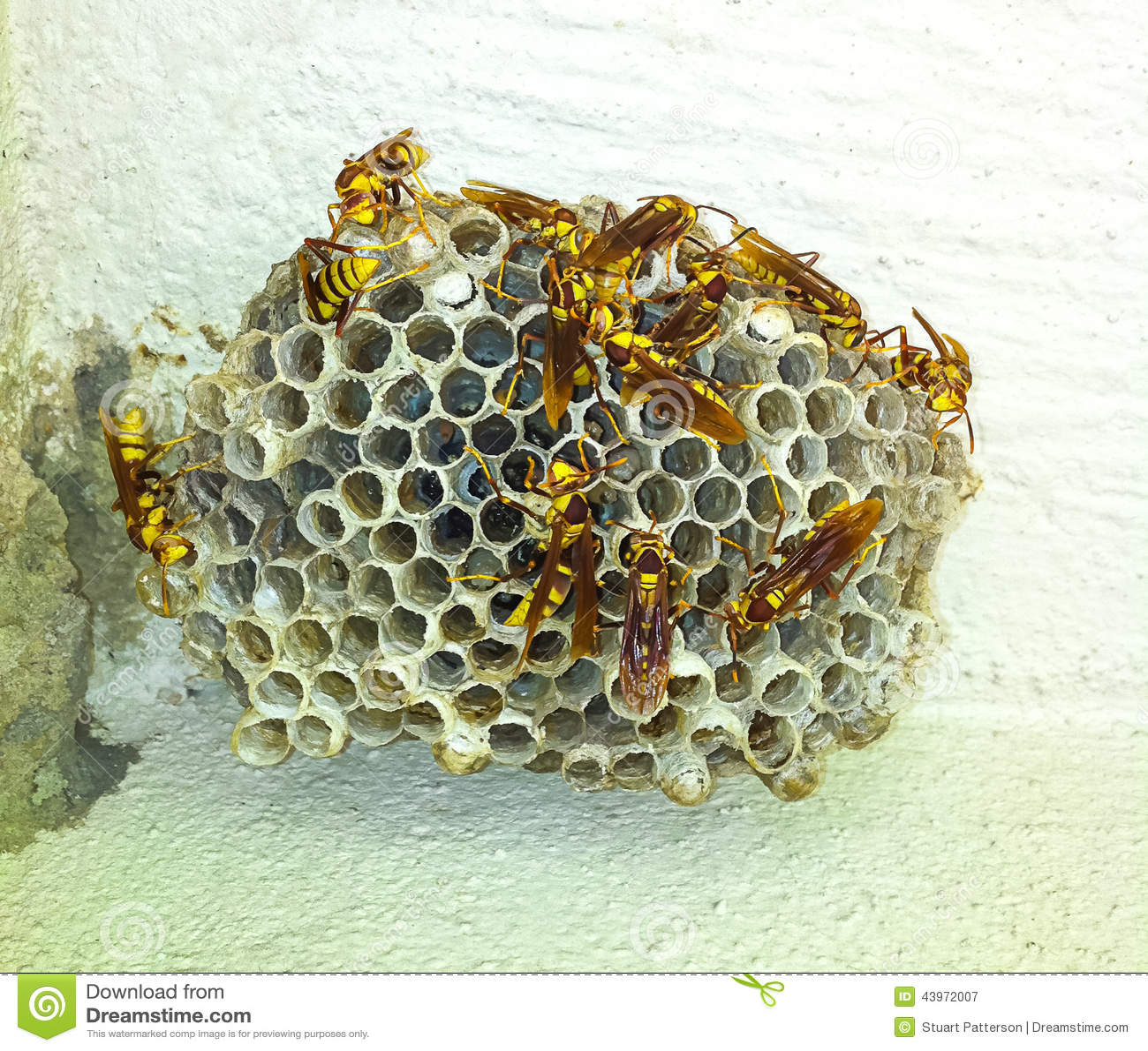 Φωλιά σφηκών στον τοίχο