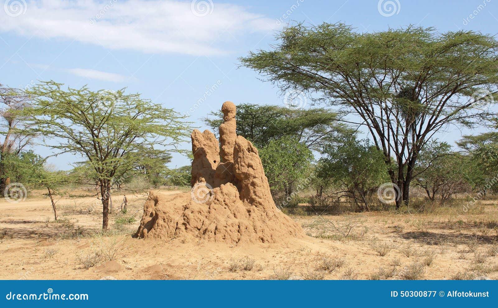 Φωλιά τερμιτών, Αιθιοπία, Αφρική