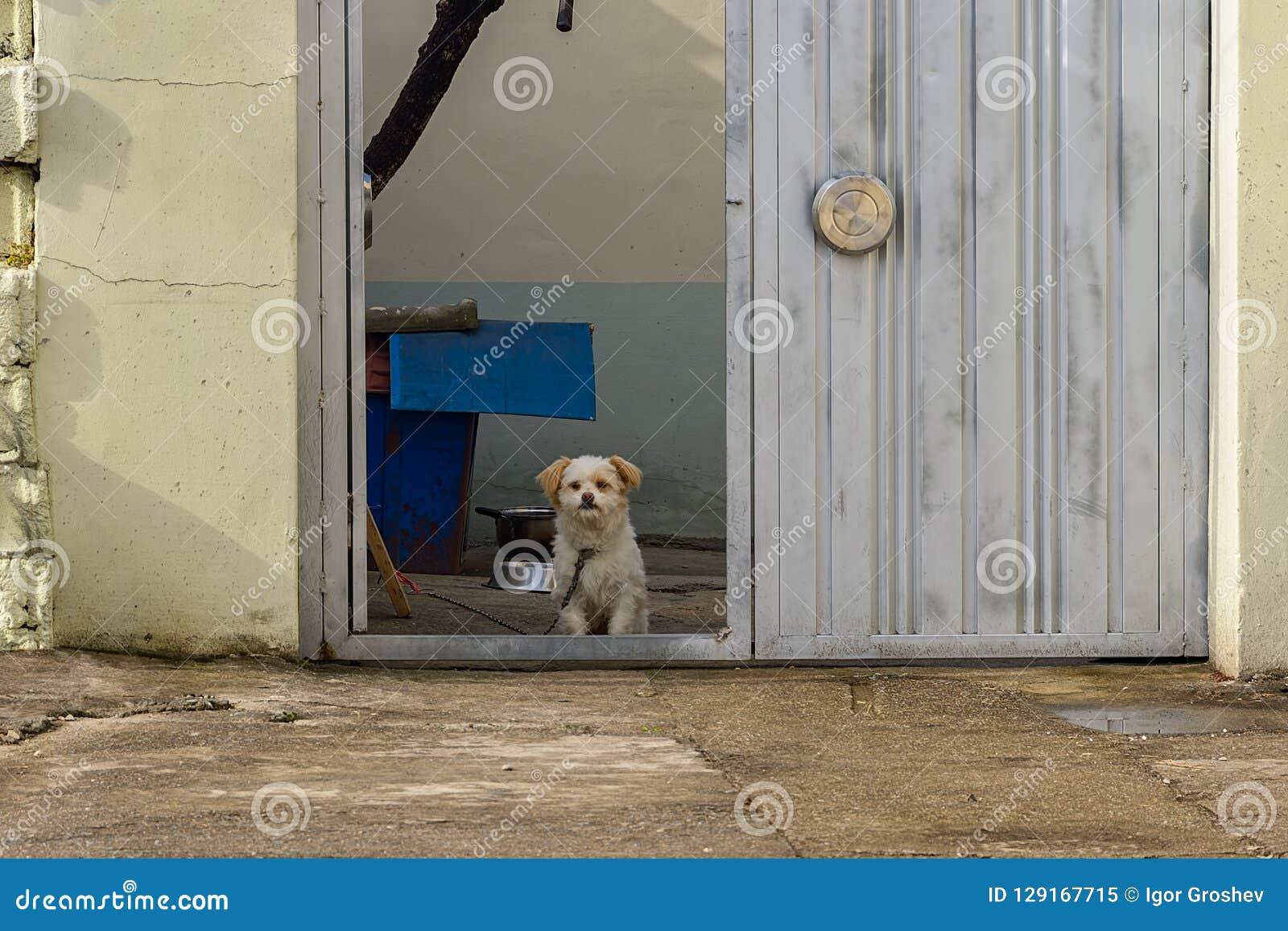 Φύλακας στην πύλη