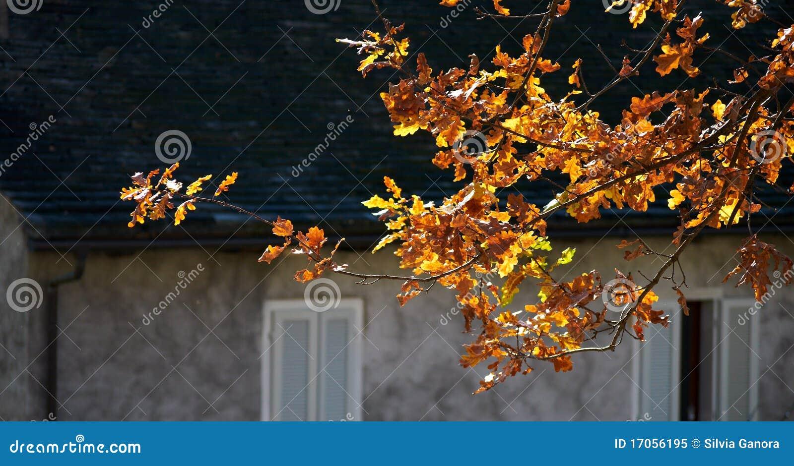 φύλλα κίτρινα